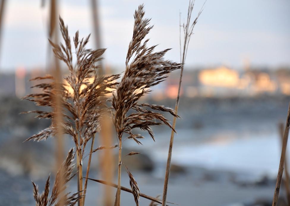 cold beach 2w