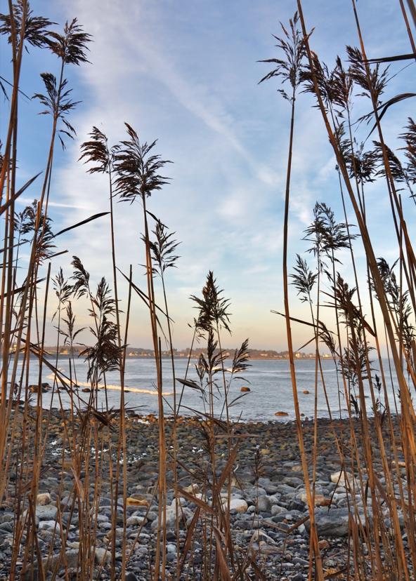 cold beach 3w